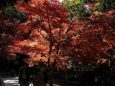 2007_1123miyajima0006