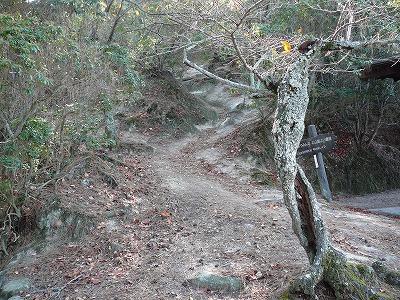 2007_1123miyajima0052